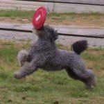 FrisbeeGumby2