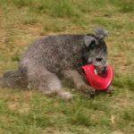 FrisbeeWhimsy1