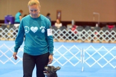 Scirpasta-Chili-UD-OA-OAJ-NF-CGC-in-Obedience-with-owner-Taru-Parvin